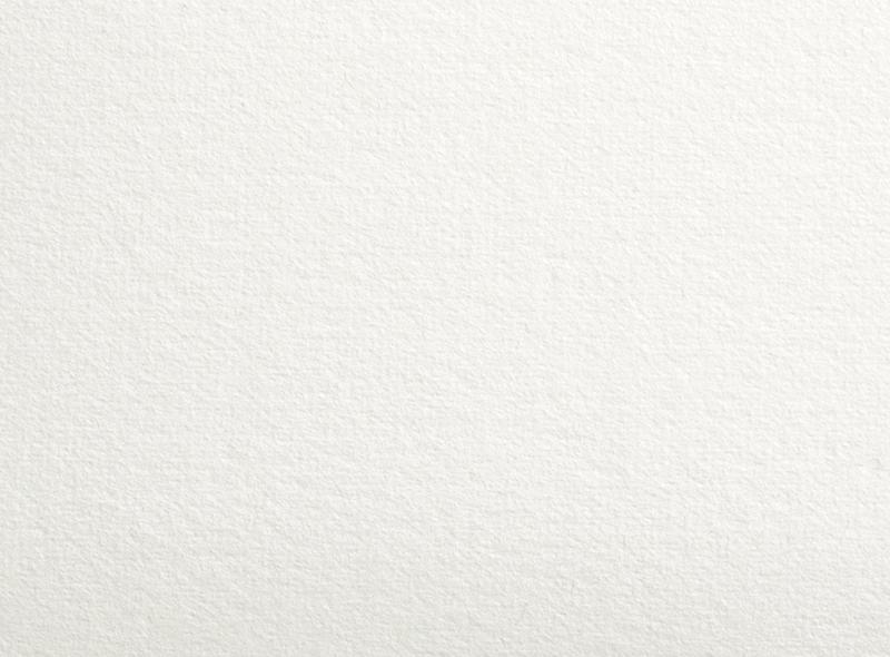 ロサスピーナ ホワイト(拡大写真)