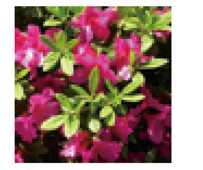 アナログ画像が1インチ×1インチだった場合、36dpi、アナログ画像の等倍でスキャンした画像は、36×36ピクセルになる。 72dpi、アナログ画像の等倍でスキャンした画像は、72×72ピクセルになる。