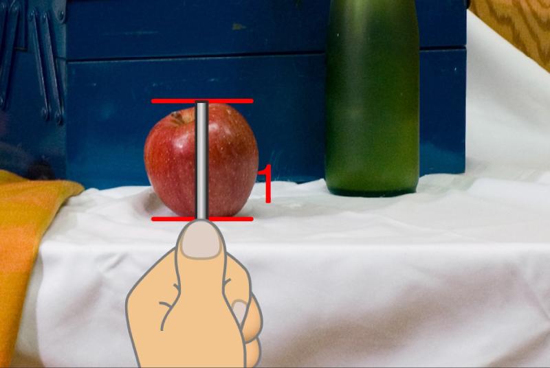 手順4. まず、かざしている棒の先端を、リンゴの上端に合わせます。続いて親指の先を、リンゴの下端に合わせます。これが基準のリンゴの大きさとなります。