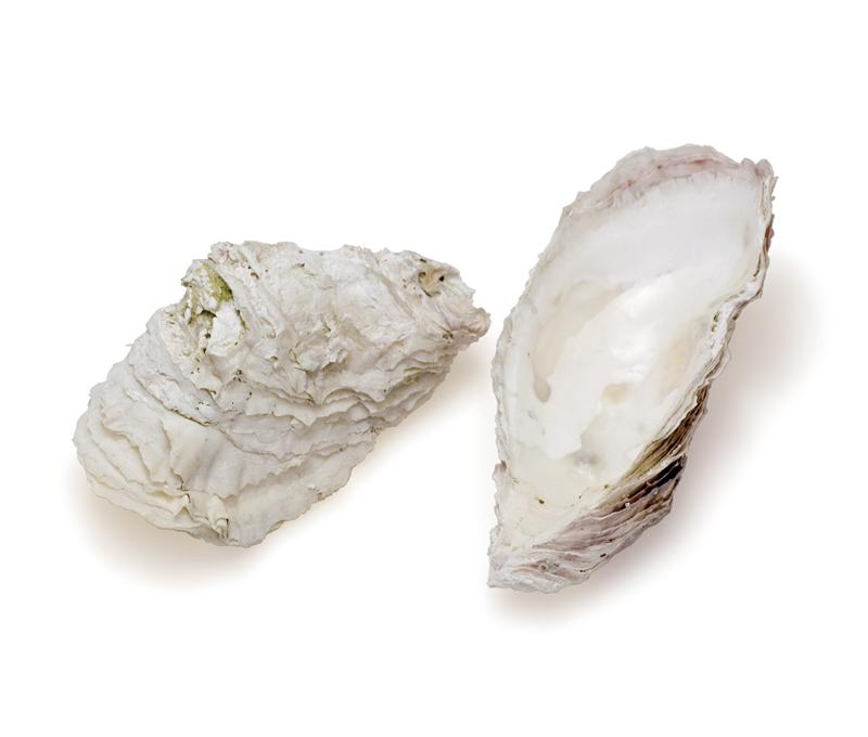 風化された牡蠣